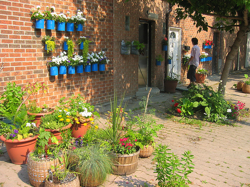 Image of wall garden via Happy Sleepy, Flickr