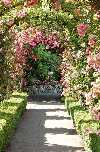 Rose arbour image via nan_hann, Flickr
